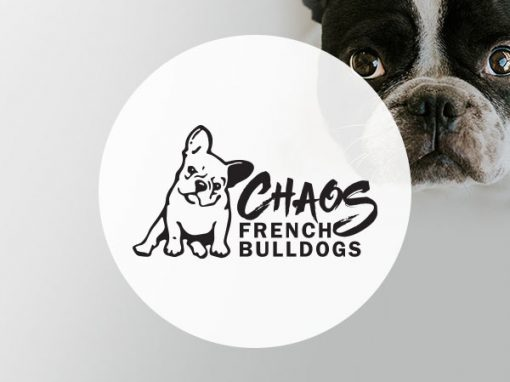 Chaos French Bulldogs